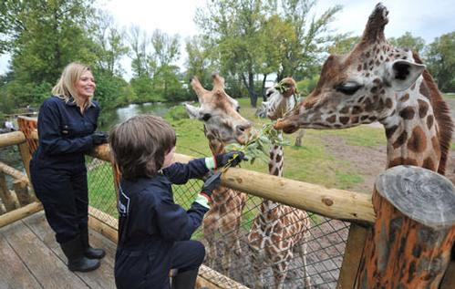 North of England Zoological Society, Chester Zoo, Giraffe Feeding Platform