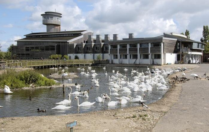 Wildfowl and Wetlands Trust, Slimbridge, Gloucestershire